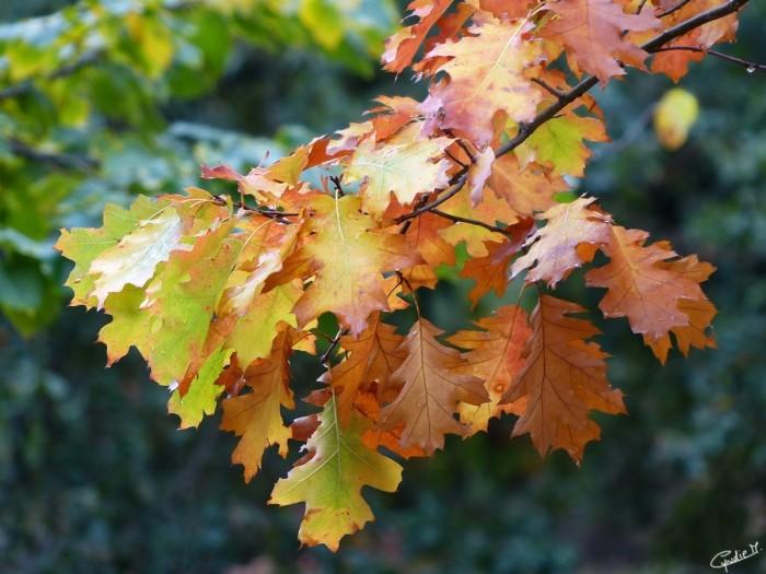 Outono_folhas