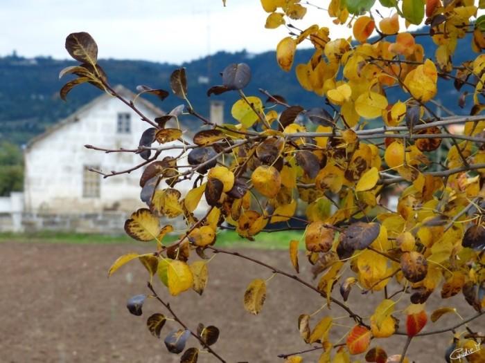 Outono_Chaves (8)