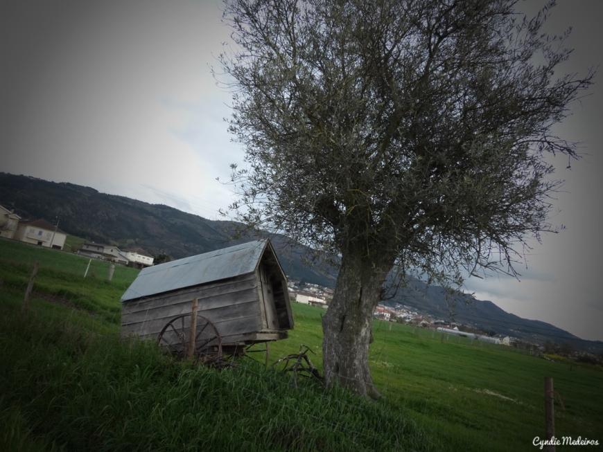 Carroça e oliveira_Chaves (1)
