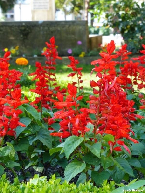Jardim do Bacalhau_Chaves (4)