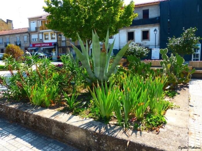 Jardim do Bacalhau_Chaves (9)
